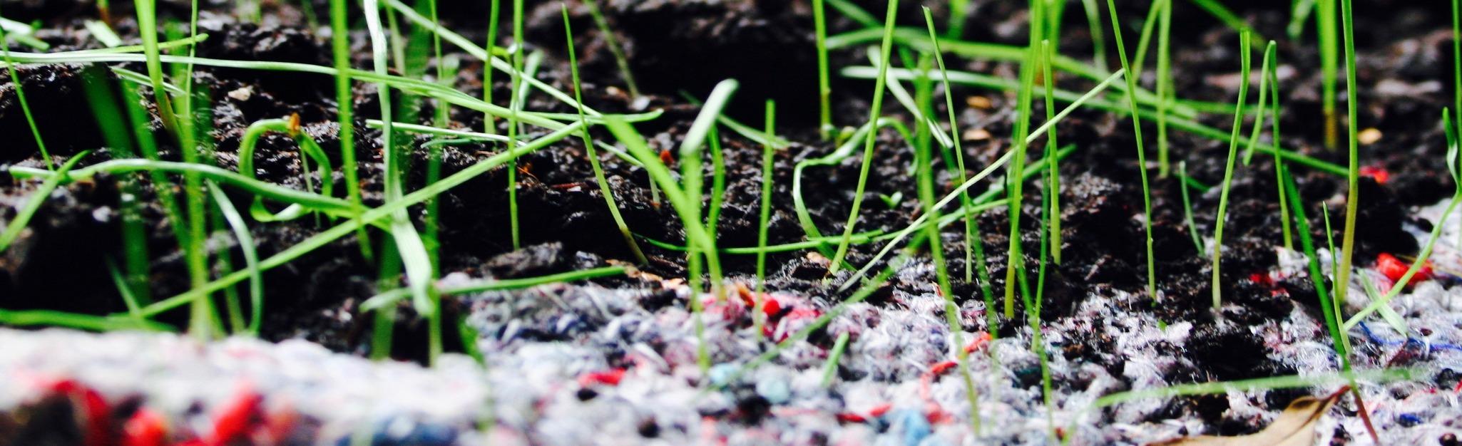 biowłóknina z nasionami traw